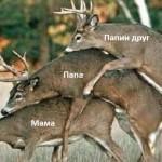 Олег Трофимов: ЛИБЕРАЛЬНЫЕ ЦЕННОСТИ В СТРАНЕ КАЛЬВИНИСТОВ