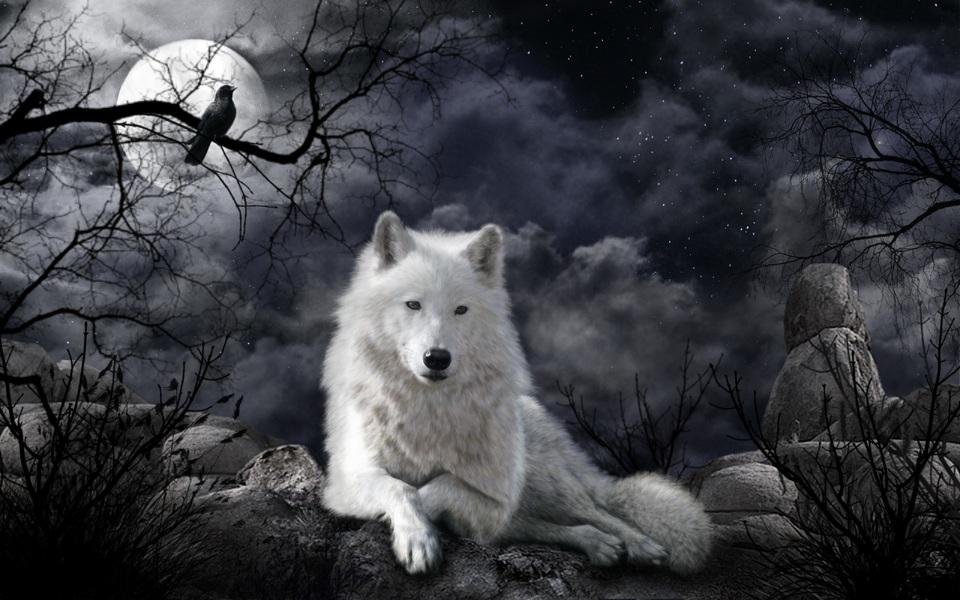 Wolves_Moon_Night_White_484877