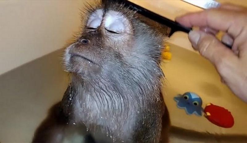 monkey-jpg