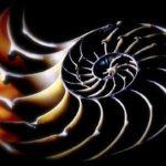 Протонамесник Горан Живковић: ОДЈЕЦИ ПЕТИЦИЈЕ О ДАРВИНИЗМУ – 15 МЕСЕЦИ КАСНИЈЕ